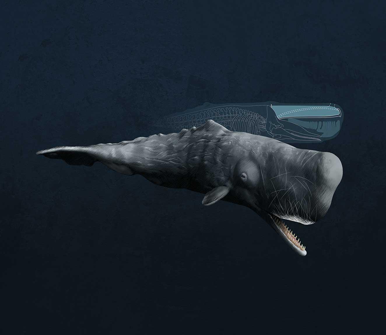 Origami: Sperm Whale - YouTube | 1150x1324